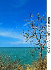 tree over the sea