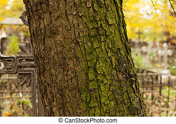 Tree, overgrown with moss