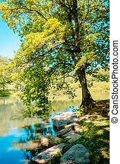 Tree overhanging the lake at a park
