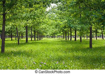tree park landscape