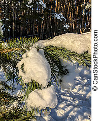 tree photo under snow in winter, Christmas