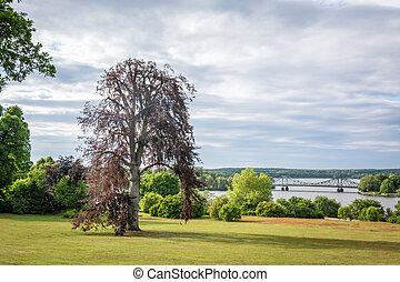 Tree photography, summer landscape