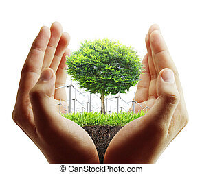 tree, plant in the hand