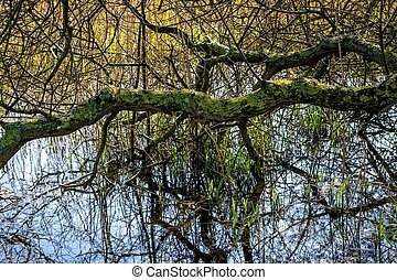 Tree reflected in a pond