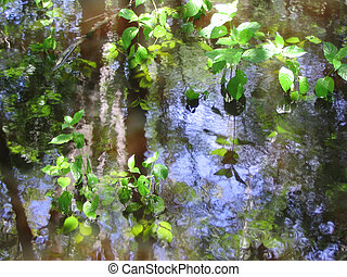 a reflection of trees in the water of a pond