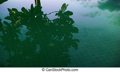 Tree reflection in pool