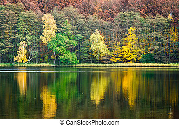 Tree reflection in the lake at autumn