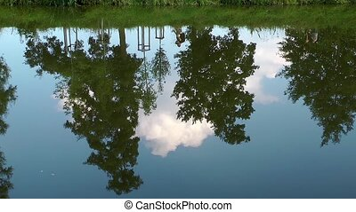 Tree Reflection on the River
