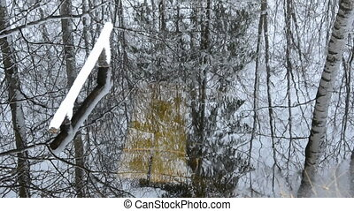 tree reflections in the water