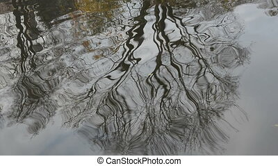 tree reflections on autumn water