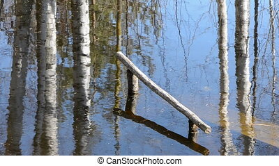 tree reflections on pond water