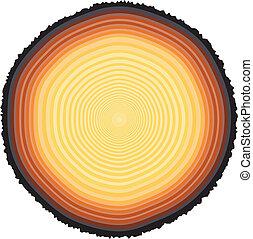 Tree rings - Editable vector illustration of tree rings on a...