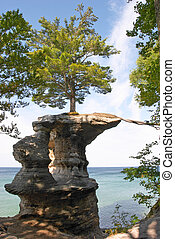 Tree Rock Pedestal