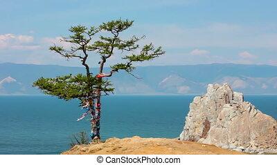 Tree. Rock Shamanka, headland Burhan, Olkhon island, Baikal,...