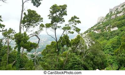 Tree rocks view mountain - Southwest desert lone cedar tree...