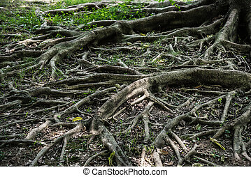 tree root horizontal