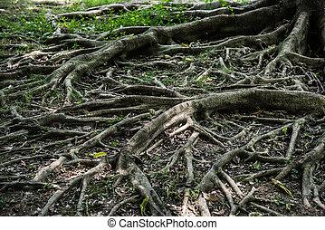 tree root horizontal