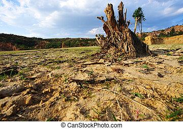 Tree root on dried field