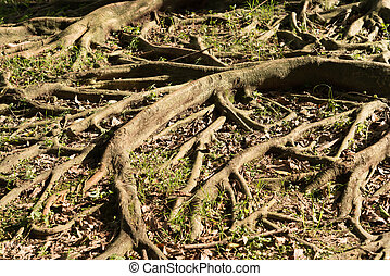 tree root with sunshine