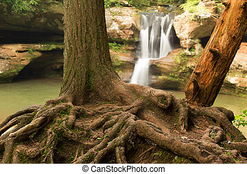 Tree roots in front of Upper Falls at Old Man's Cave,...
