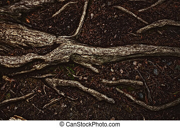 tree roots on the soil closeup