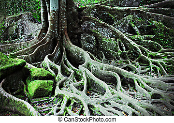 Tree roots - Roots of the magic tree