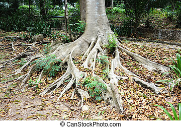 tree roots - close up of tree roots