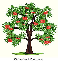 Tree rowanberry and ripe berries on branch - Vector...
