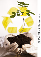 Tree seedling in hands