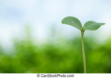 Tree seedling on spring background