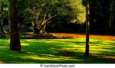 tree shadow moving across lawn - HD1080p: TIME LAPSE shot of...