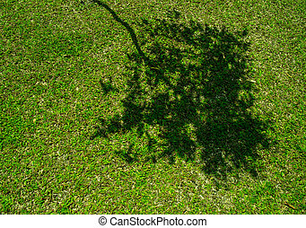 Tree shadow on short green grass in spring