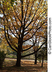 tree-shaped, parc, -, automne, support bougie