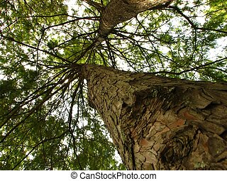 shot of a tree from bottom to top.