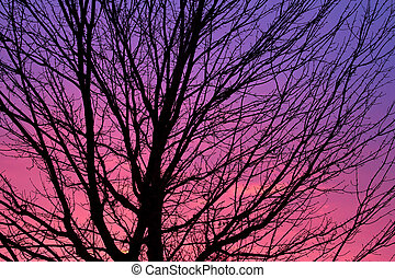 Tree Sihouetted by the Dawn Sky