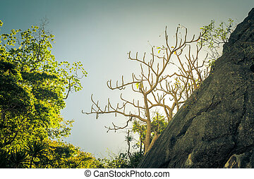 Tree silhouette against the sky, said trees. Philippine nature