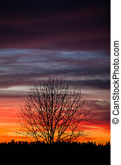 Tree silhouette and beautiful sunset clouds