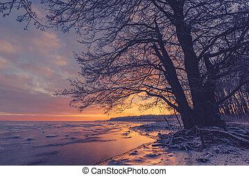 Tree silhouette at a frozen sea