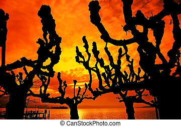 tree silhouette at sunset, trees