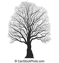Tree Silhouette. Black bare oak outline. Detailed image....