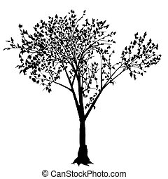Tree Silhouette - Deciduous Tree - Black Silhouette, Vector