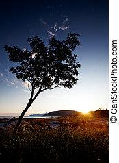 Tree Silhouette Coast