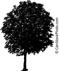 tree silhouette - silhouette of isolated tree