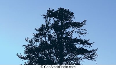Tree Silhouette In Strong Wind