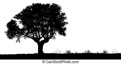 Silhouette of a oak tree on white. Panoramic version