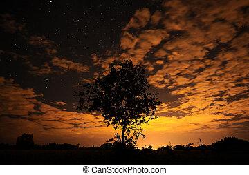 Tree silhouette on starry sky.