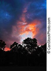 Tree silhouette on sunset
