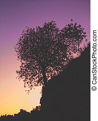 Tree silhouette on the background of a beautiful Mediterranean sea purple sunset