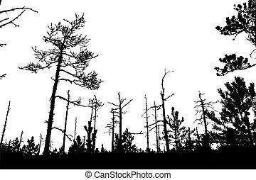 tree silhouette on white background,