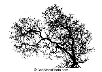 Tree Silhouette Over Cloudy Sky